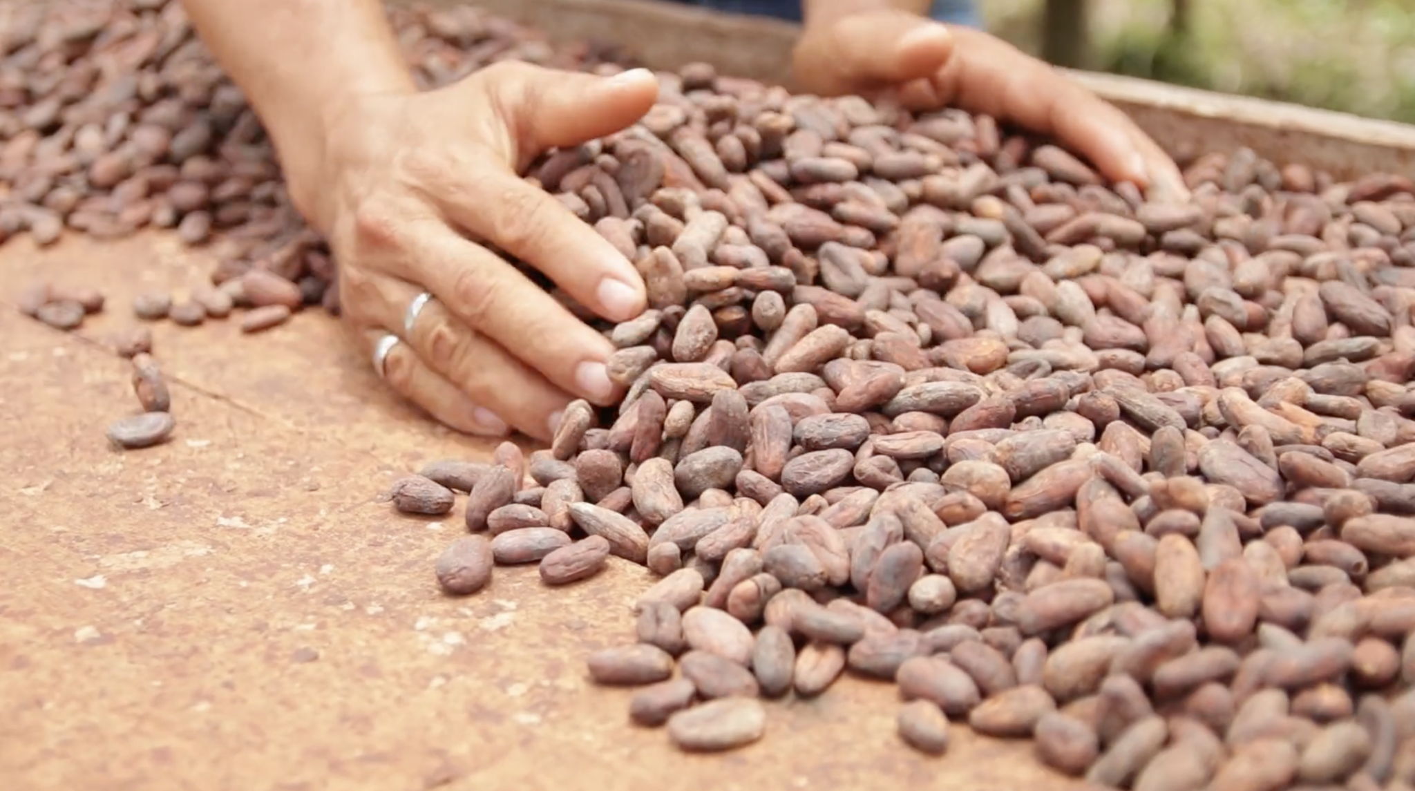 Pacari: Ecuador Grows the World's Best Chocolate